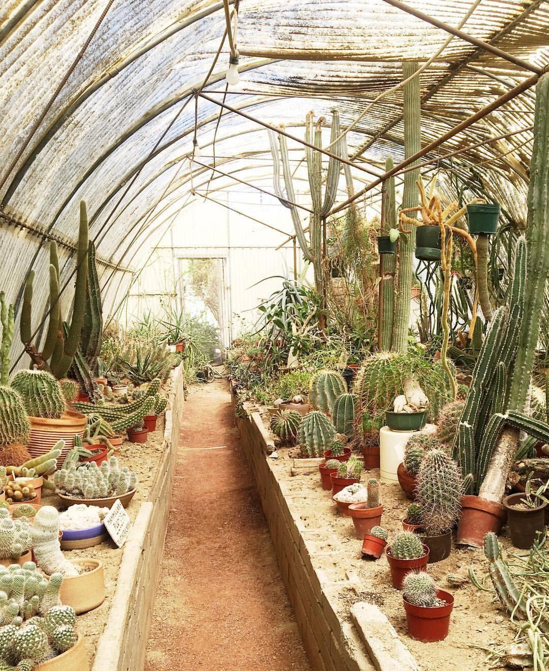Patio Place Palm Desert Ca: Morten Botanical Garden Palm Springs, CA By @thegoodtwinco