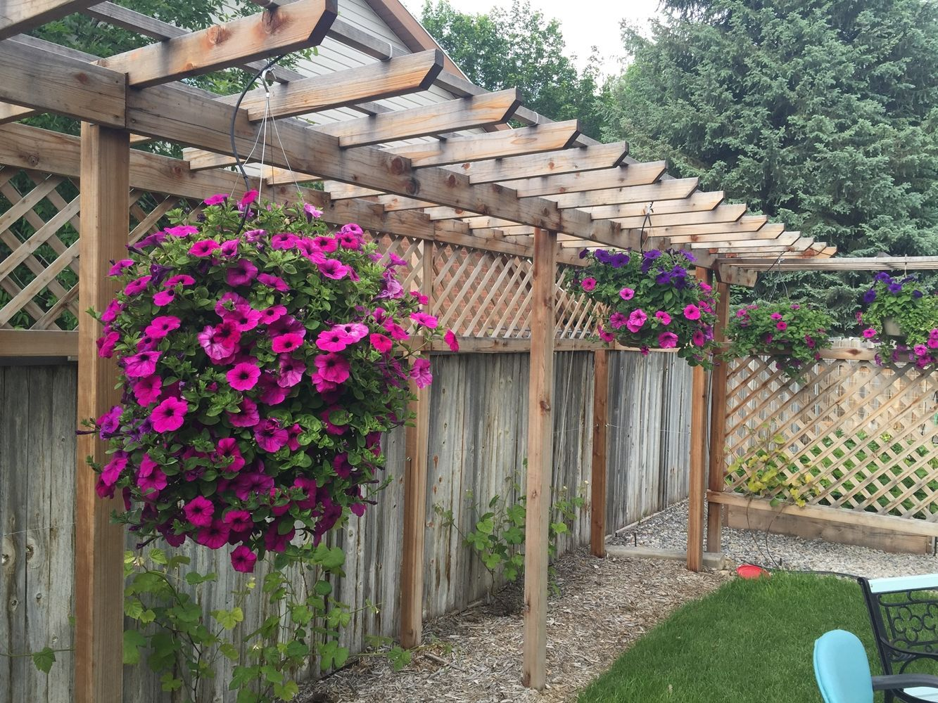 DIY Early Start Flowers for Flower Boxes Hanging baskets