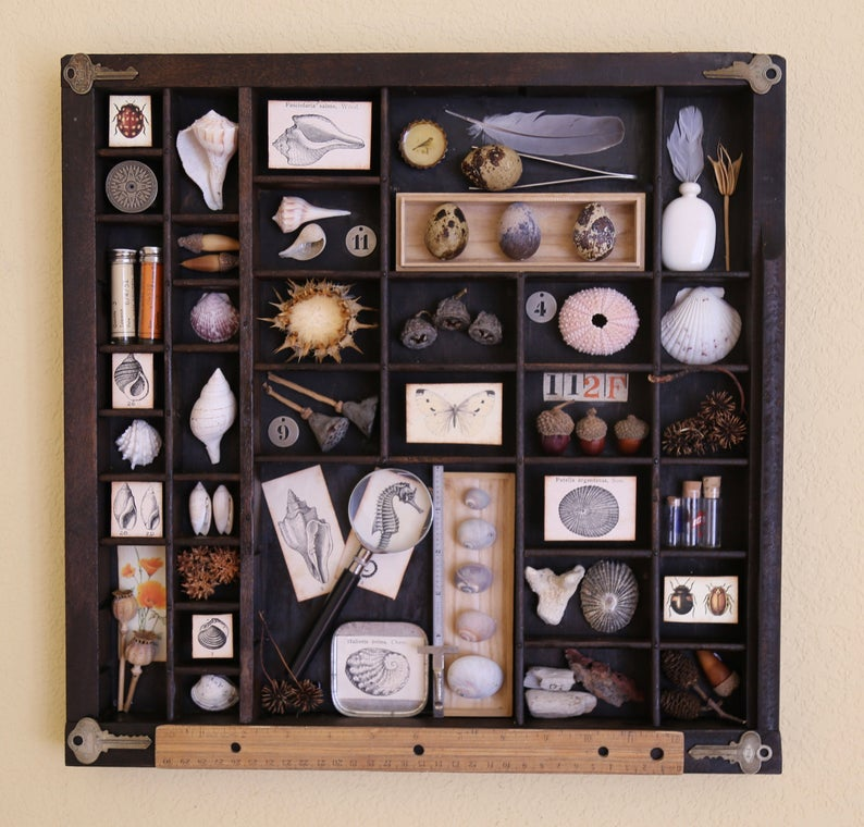 Found Object Assemblage Art Printers Tray The Naturalist Tray