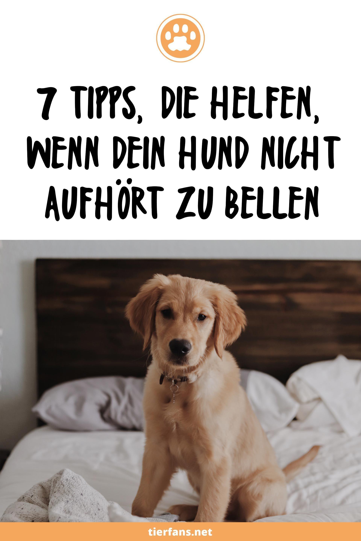 Bellen Beissen Und Leine Zerren Hunde Welpen Erziehung Hunde Erziehen Hunde