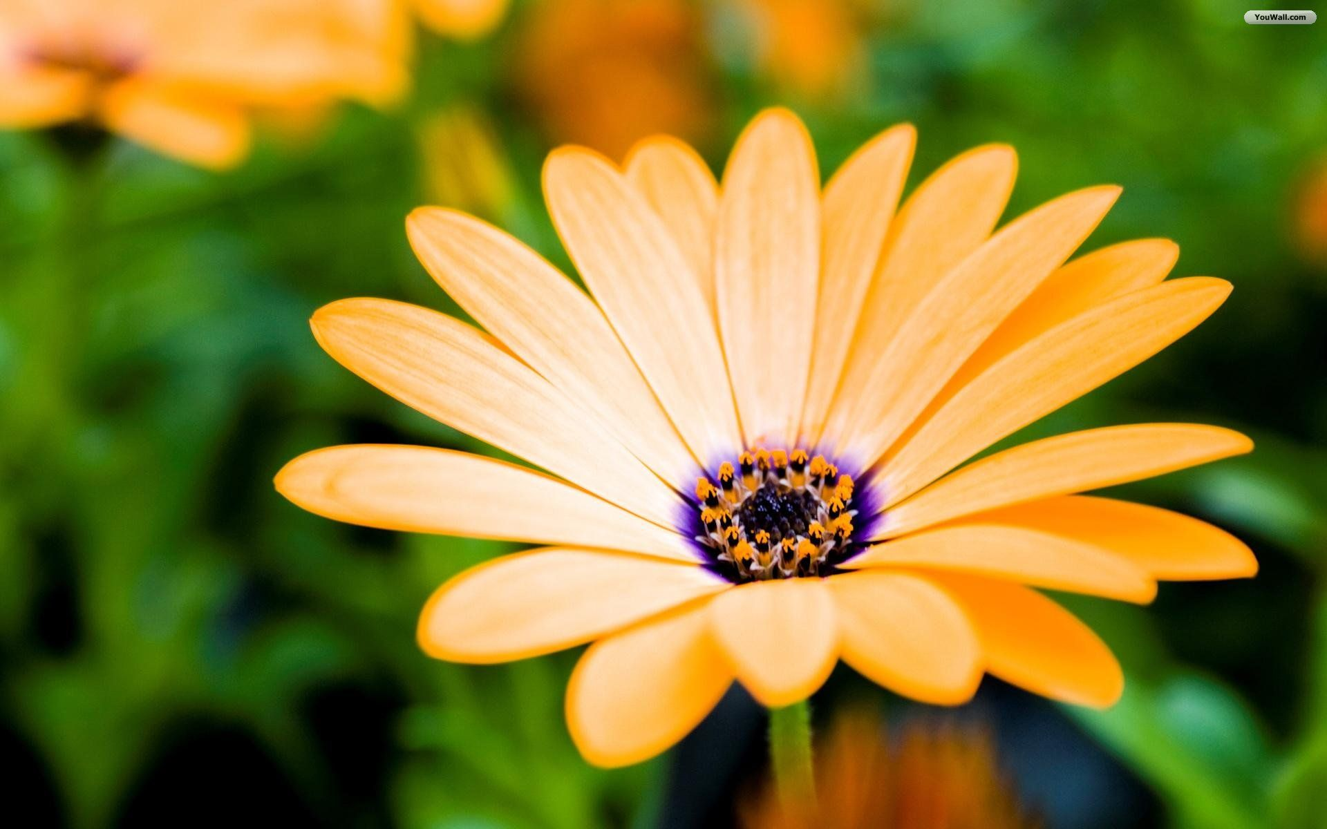Download This Awesome Wallpaper Spring Flowers Wallpaper Flower Desktop Wallpaper Flower Wallpaper