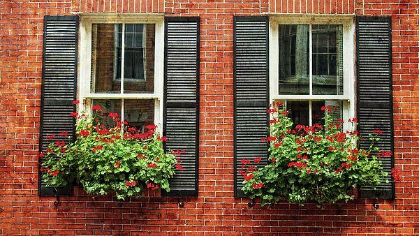 Geranium Window Boxes On Colonial Windows By Joann Vitali Exterior