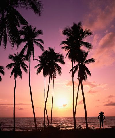 Cheap Flights To Hawaii Could Be Available Very Soon Cellphone Background Phone Backgrounds Backgrounds Phone Wallpapers Beautiful palm tree wallpaper for