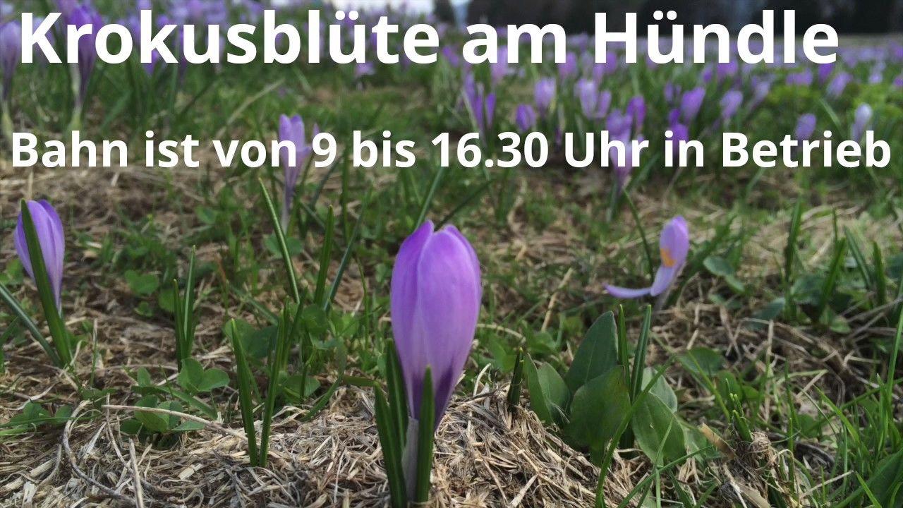 Allgauer Fruhling Krokusblute Am Hundle Im Oberallgau Das