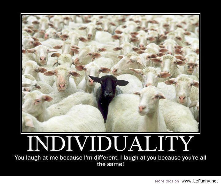 Funny Sheep Quotes