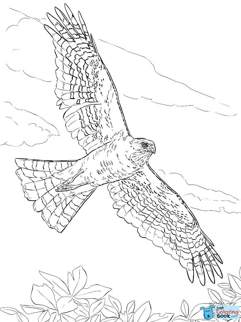 Hawks Coloring Pages Free Coloring Pages Intended For Northern Goshawks Coloring Pages