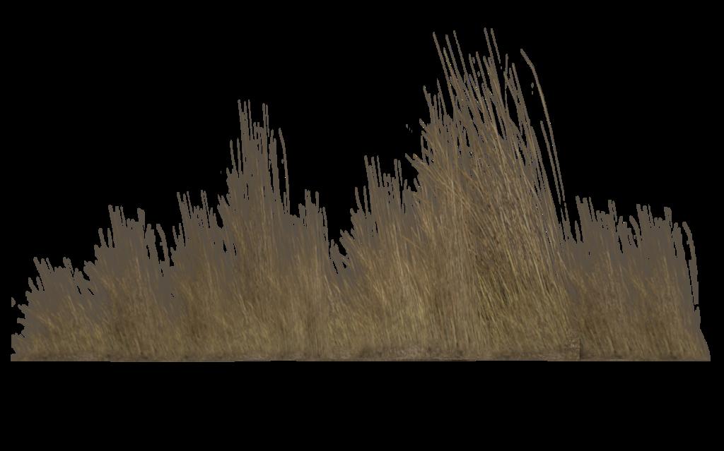 Dry Vegetation 04 By Wolverine041269 D5yfux8 Png 1024 639 Grass Photoshop Photoshop Textures Vegetation