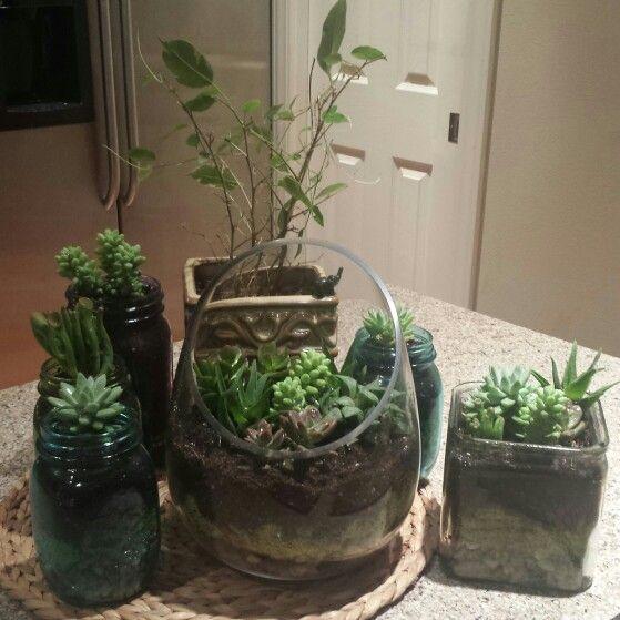 Succulent Gardens Supplies From Hobby Lobby Glass Terrarium In