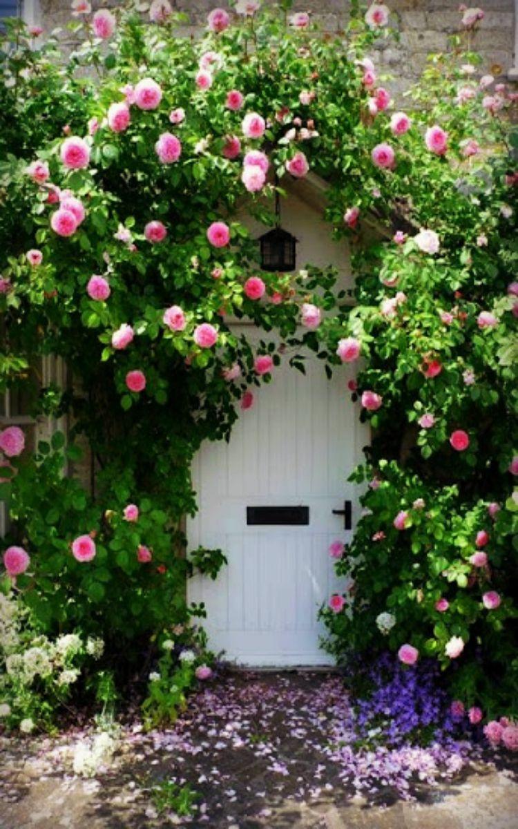 ~ Climbing Roses ~