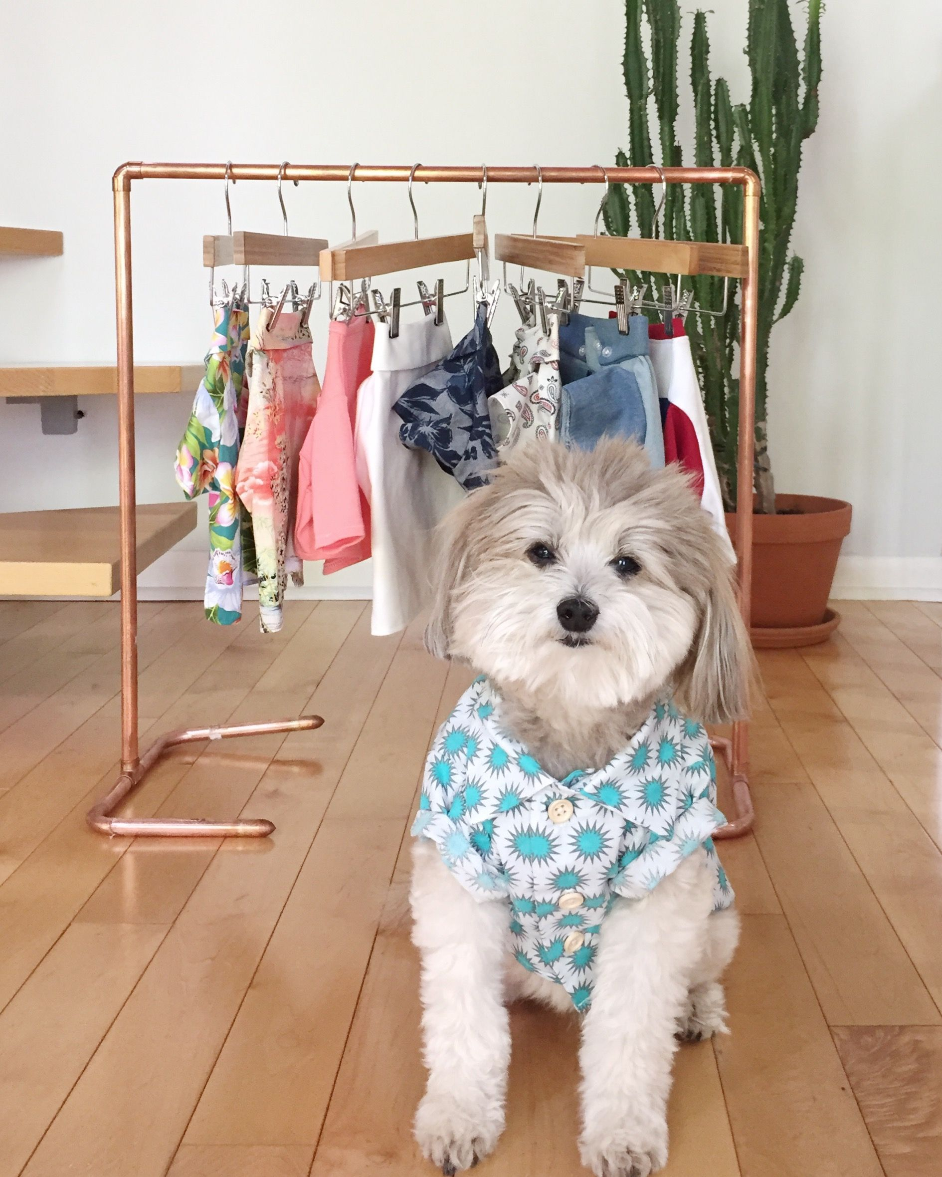 Planning His Wardrobe For The Weekend Jealousofthedog Our Online