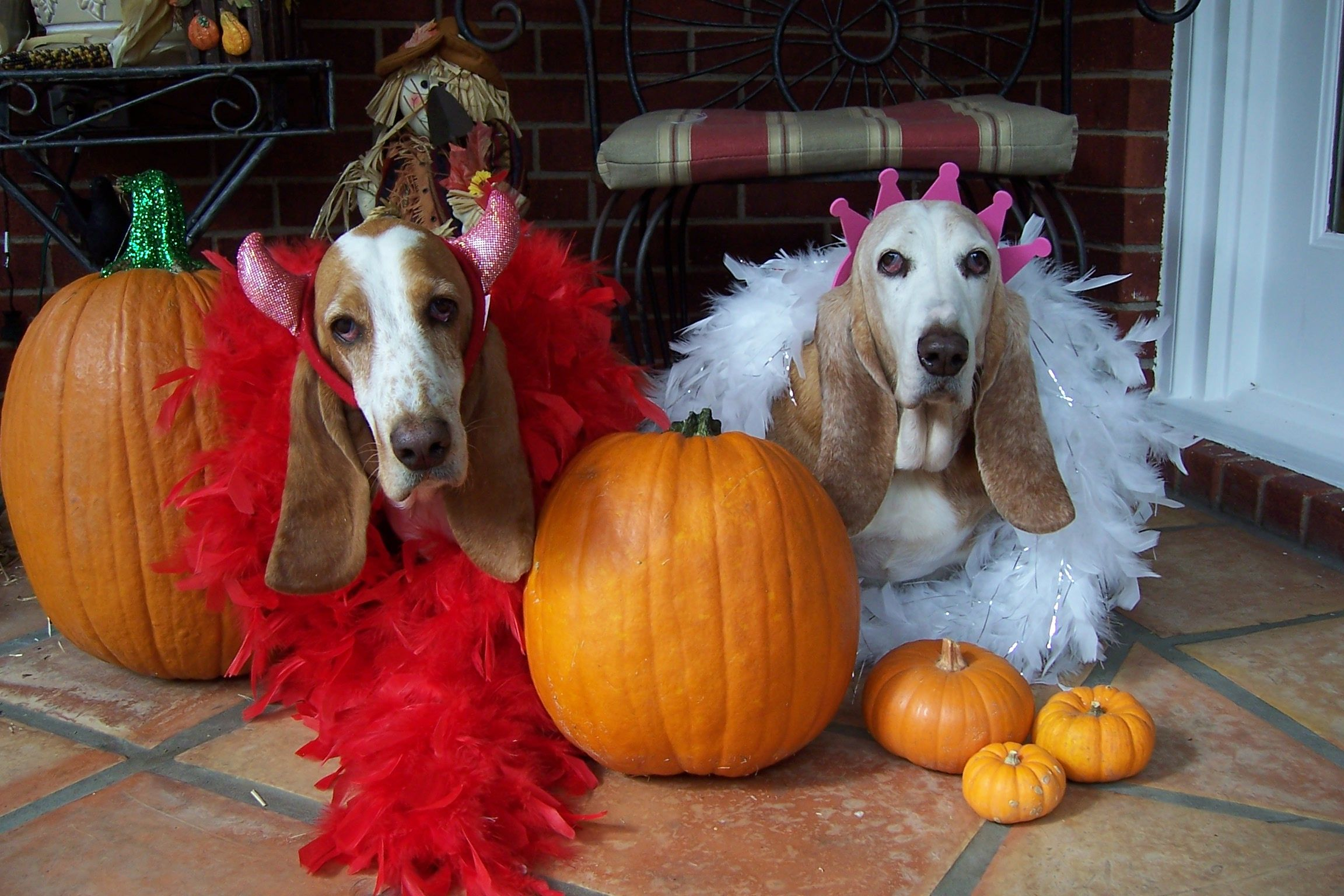 Halloween Gracie & Loretta!