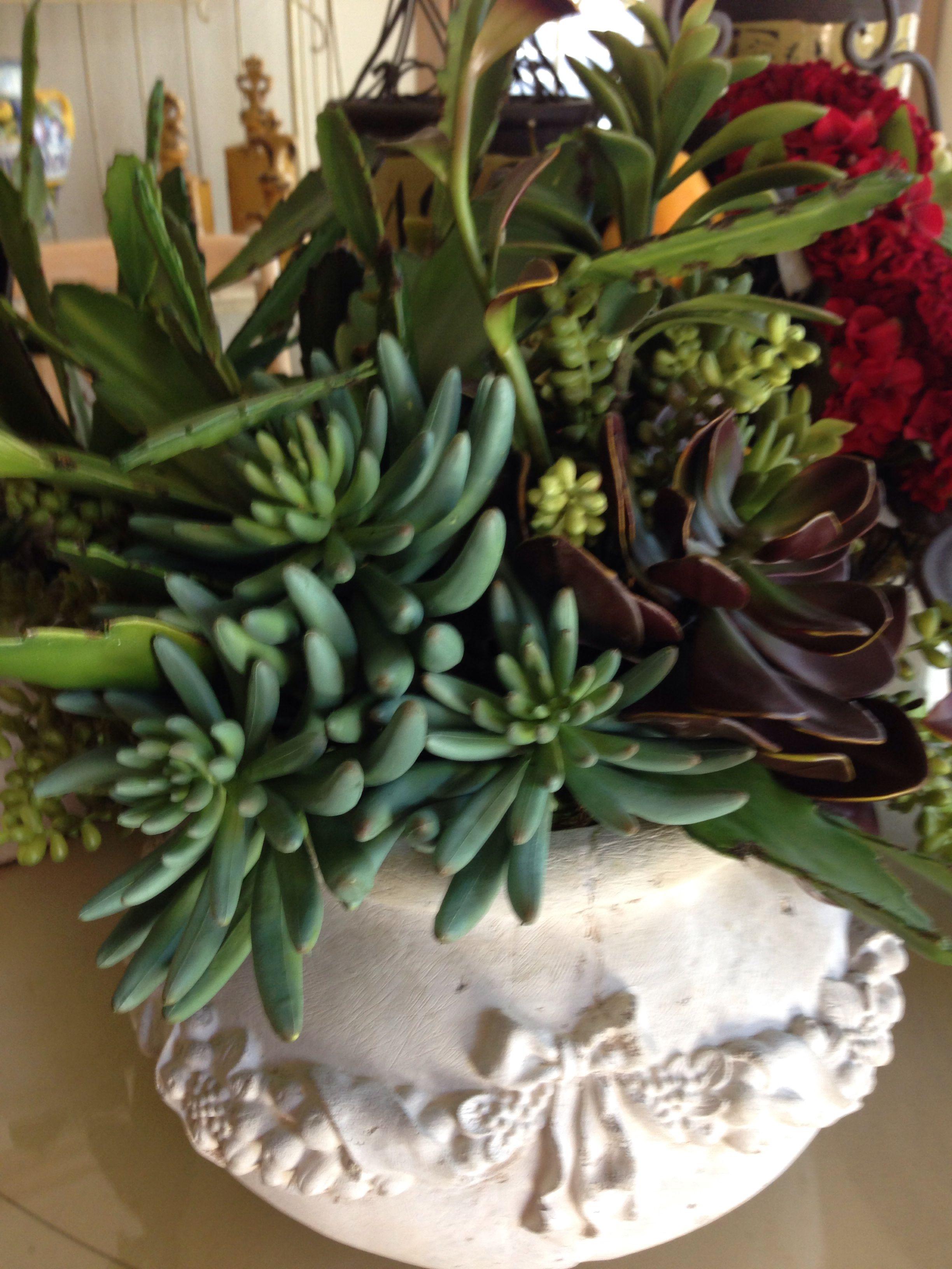 Succulents..
