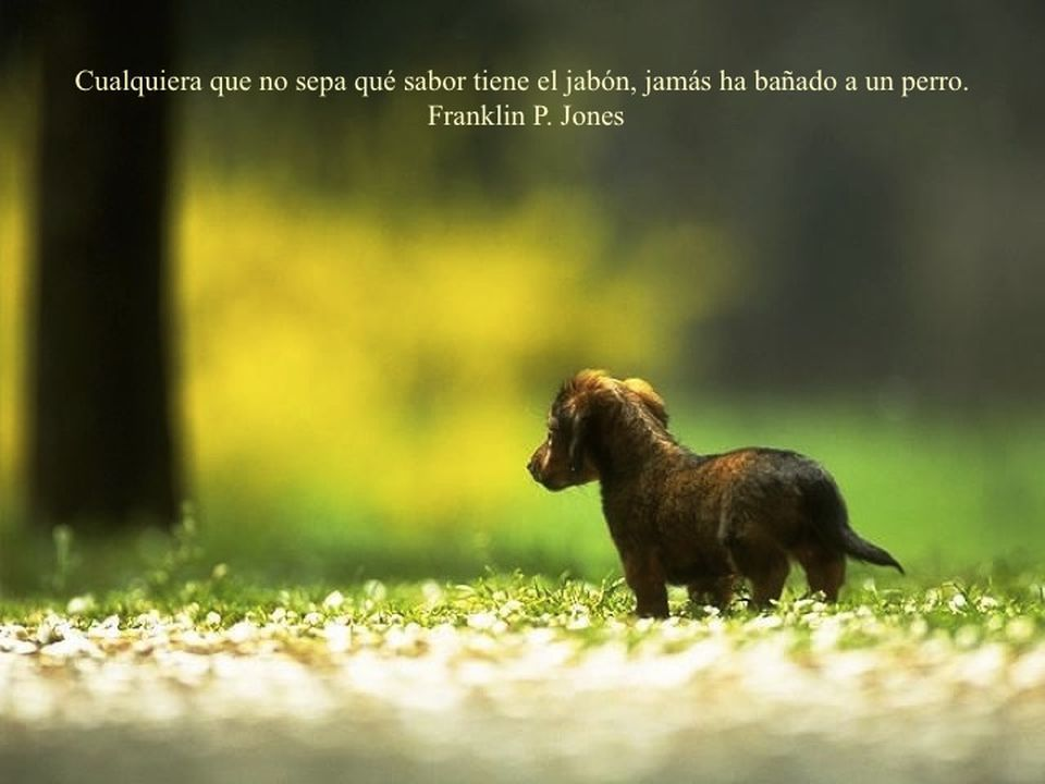 35 Best Perros images in