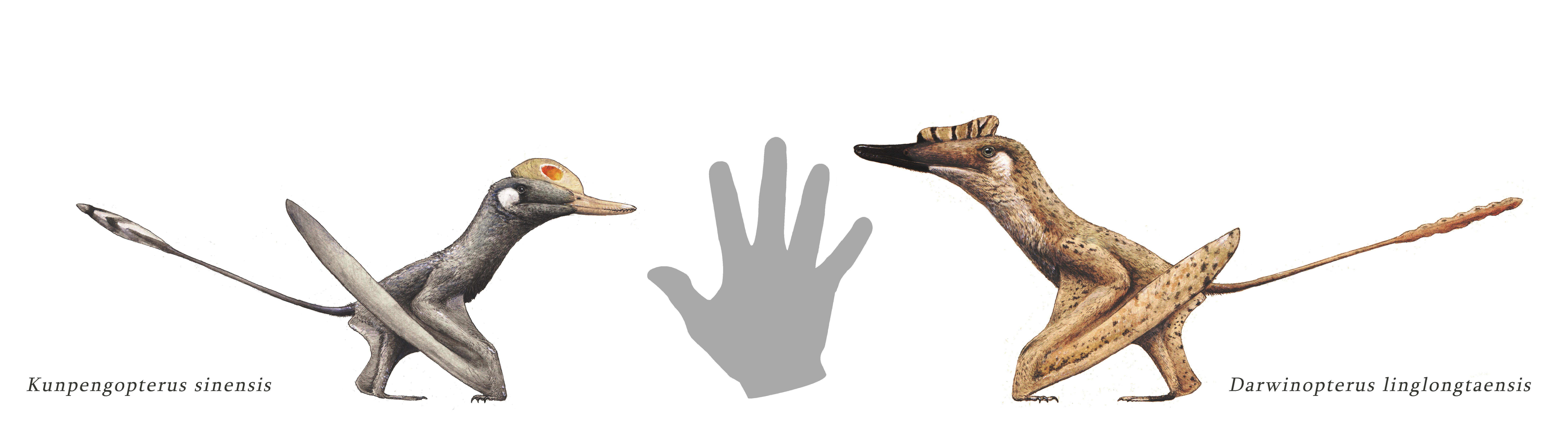 Pin by Saille on paleo-concept   Creature concept art. Paleo art. Prehistoric animals