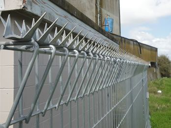 Galvanized razor spikes welded on the top of roll top fencing