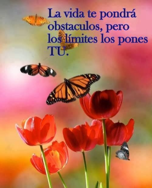"===Un Rincón para ""Luna""...=== - Página 3 56eb2c80b790aedb08fbb1bb5906bbe0"