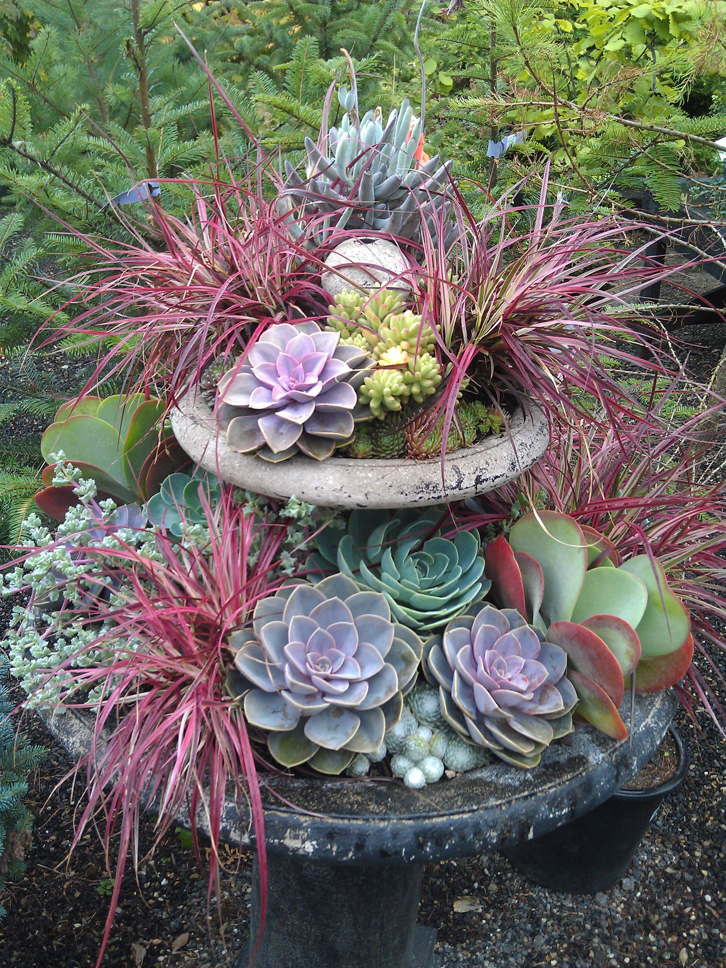 succulent fountain front yard pinterest