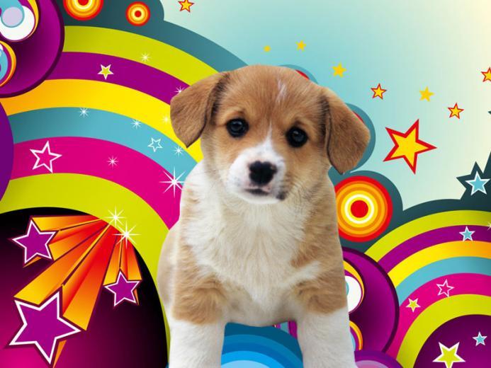50 Free Dog Wallpaper For Laptop On Wallpapersafari Cutepuppywallpapersfordesktop Cute Puppy Wallpaper Dog Wallpaper Puppy Wallpaper