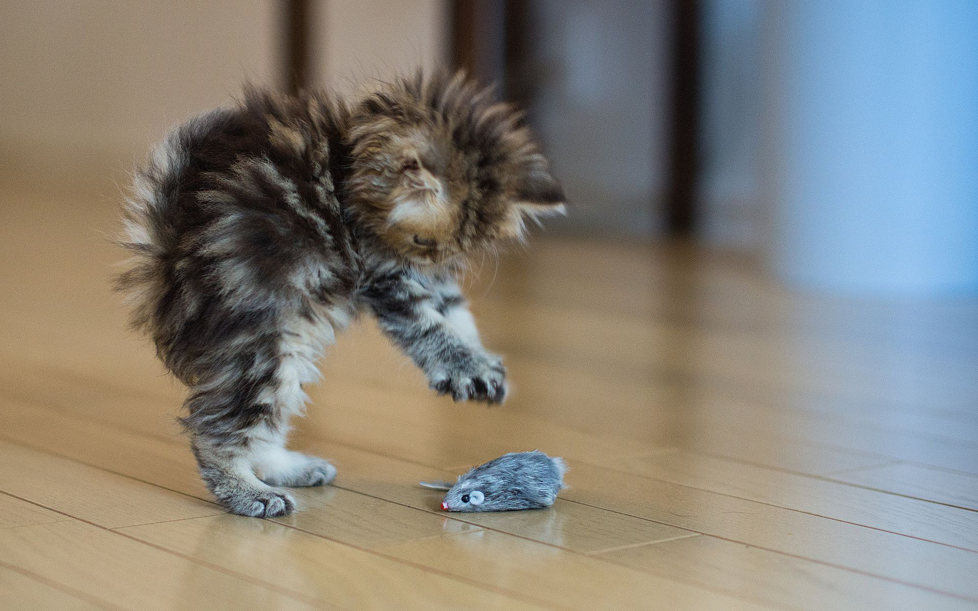 Pin By Conner5ive On Feisty Felines Kittens Cutest Cute Animals Crazy Cats