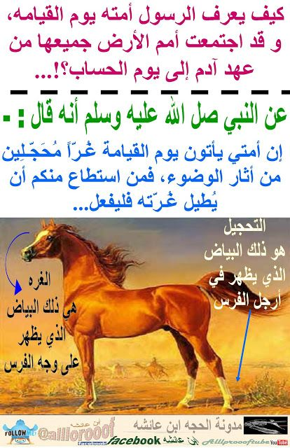 مدونة الحجه ابن عائشه Alllprooof كيف يعرف الرسول أمته يوم القيامه Islam Facts Cool Words Islamic Quotes Quran