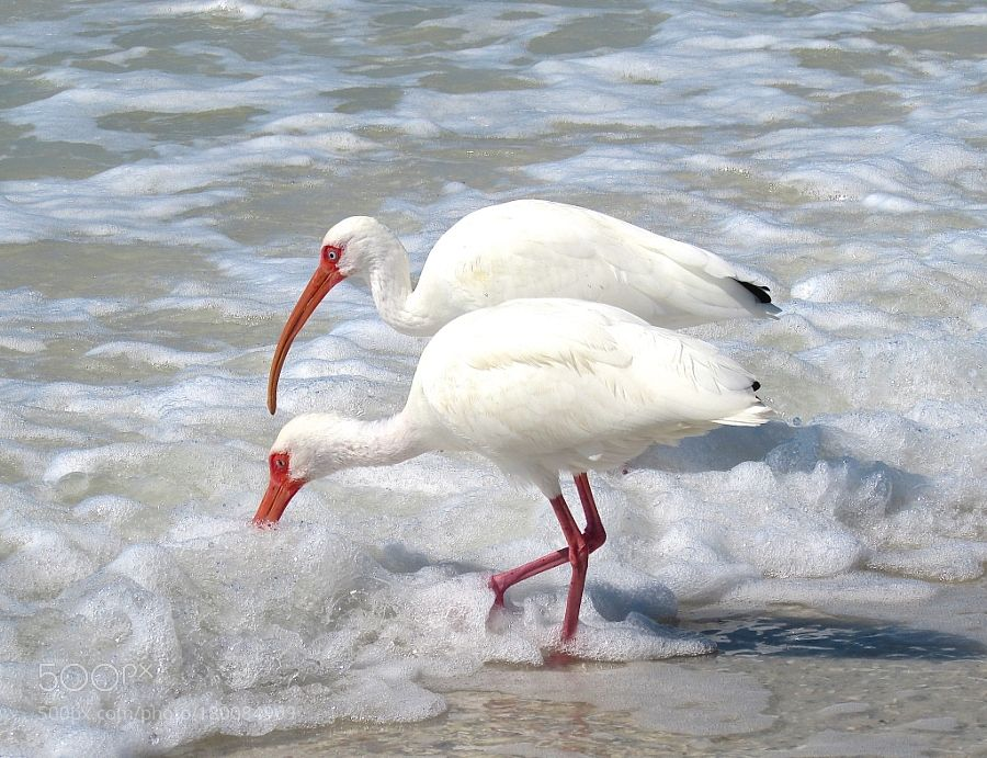 Foamy surf and Ibis by Glo. @go4fotos