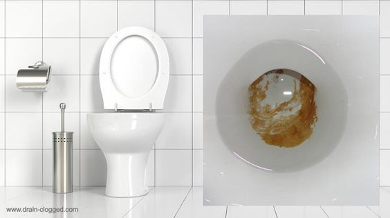 Here You Will Learn How To Remove Urine Scale In A Toilet