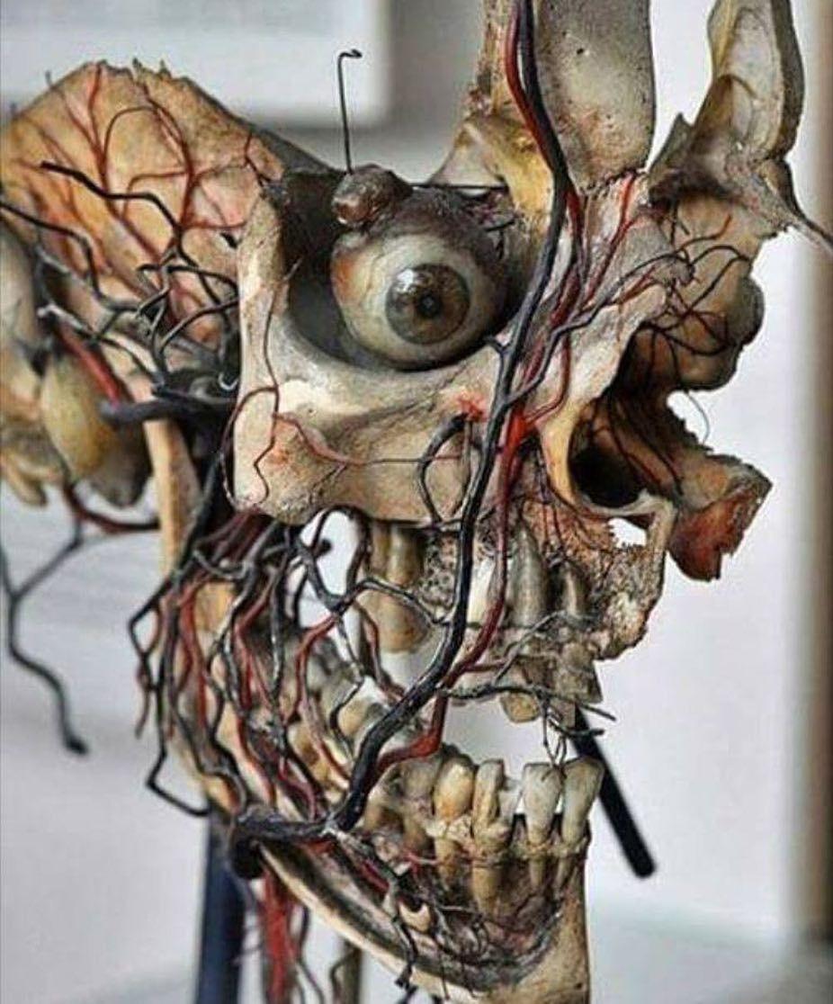 La belleza y la complejidad de la Anatomía humana. #tucerebrodigital ...