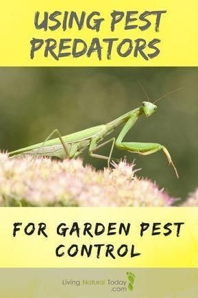 Learn the ways to use pest predators for your garden pest control – Garden pest control