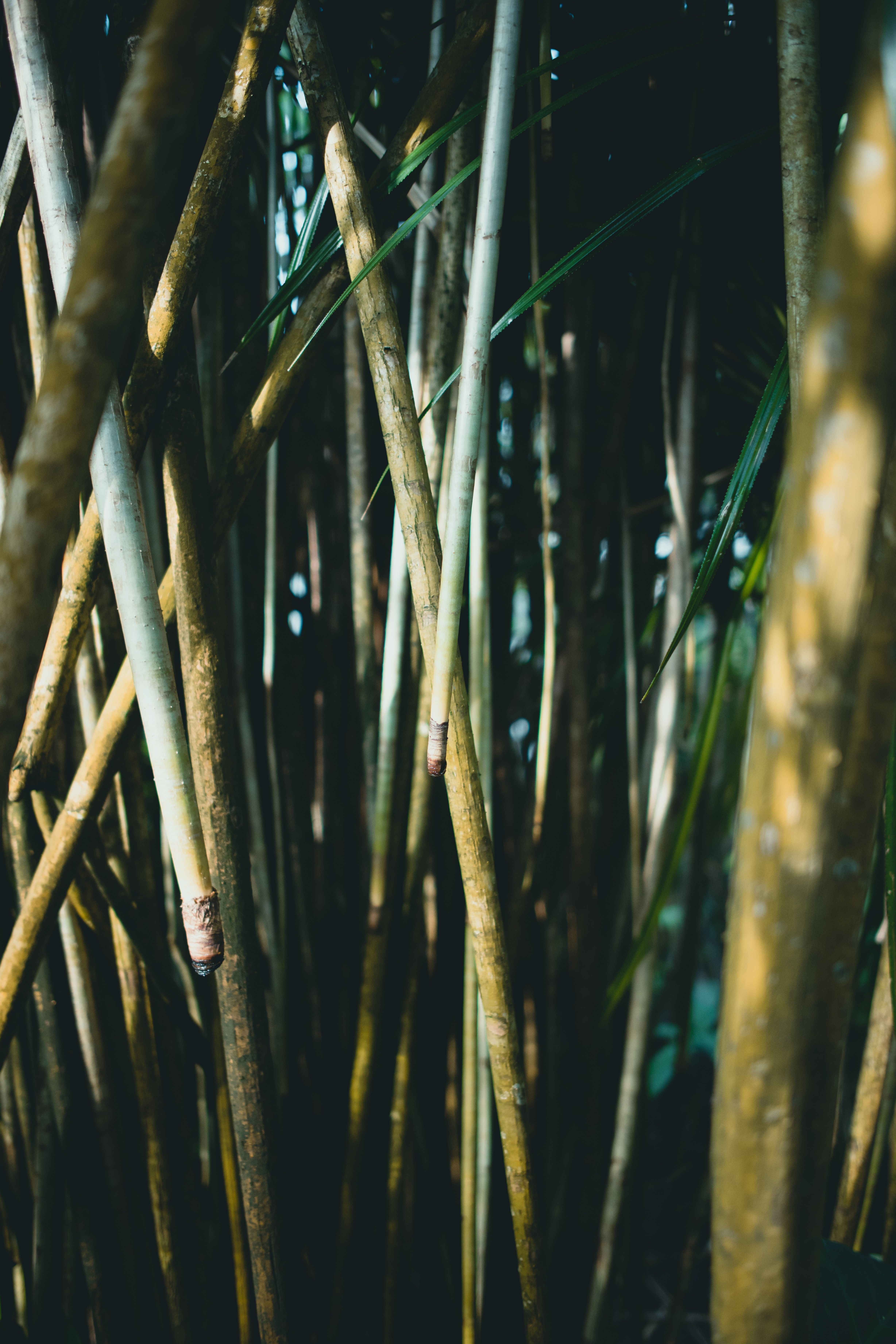 Inspired By Bamboo Bamboo Forest Wallpaper Ideas For Iphone X