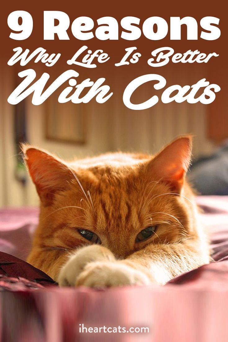 9 Reasons Why Life Is Better With Cats Cat Names Boy Cat Names Tabby Cat Names