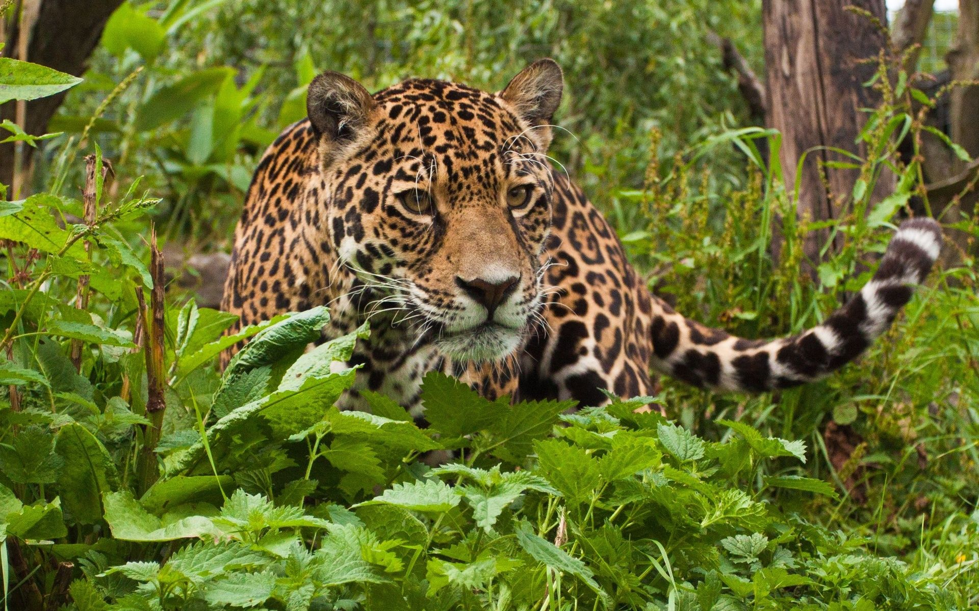 30 Amazing Rainforest Animals Most Of Them Is Endangered