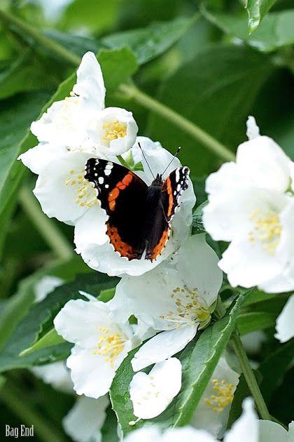 Summer and butterflies