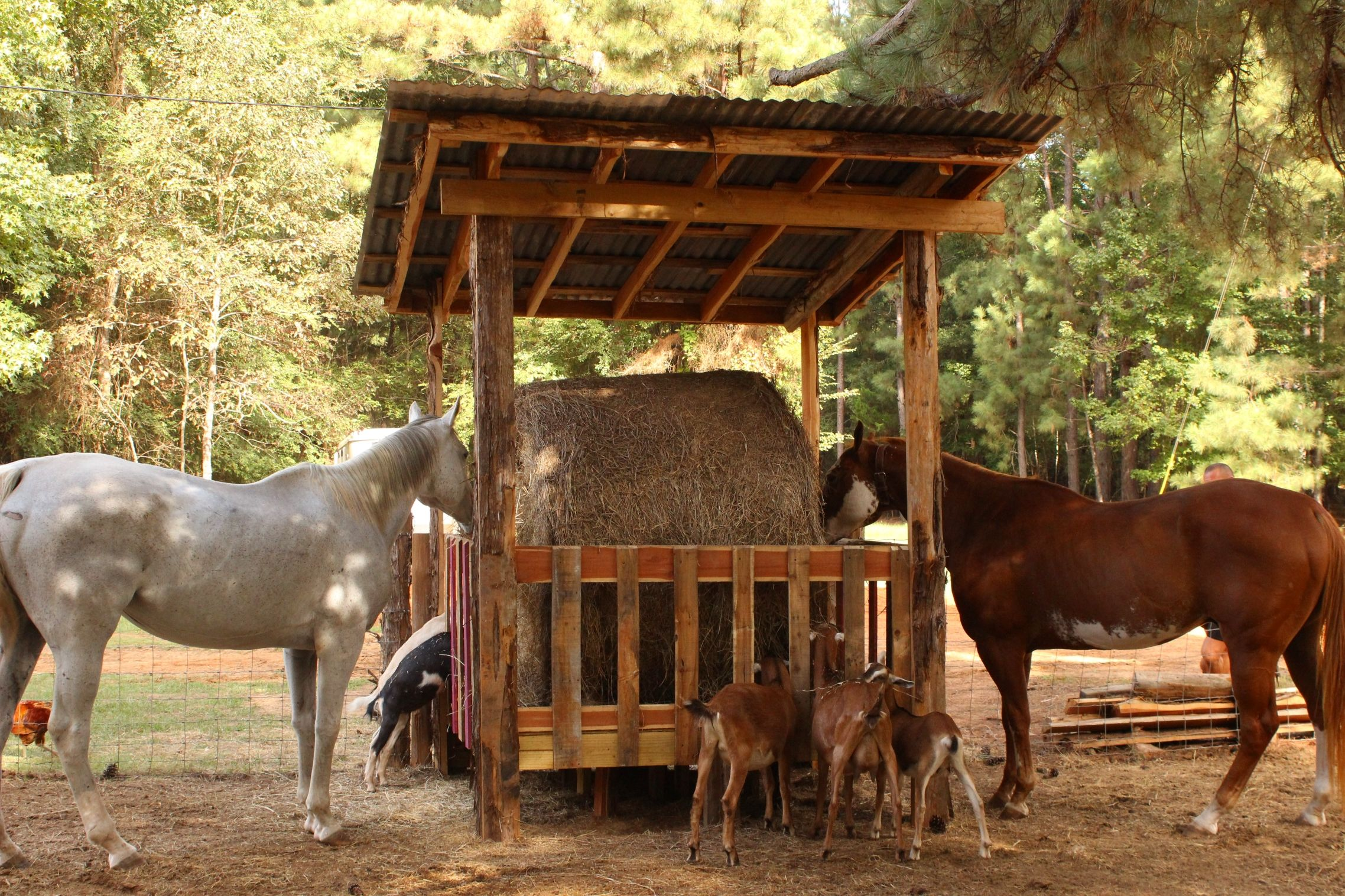 Round Bale Hay Feeder For Horse And Goats That We Built
