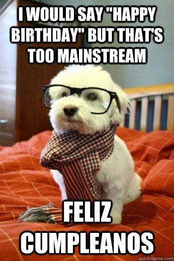 Pin By Em Cadena On Happy Birthday Hipster Dog Cute Animal Photos Adorable Cute Animals