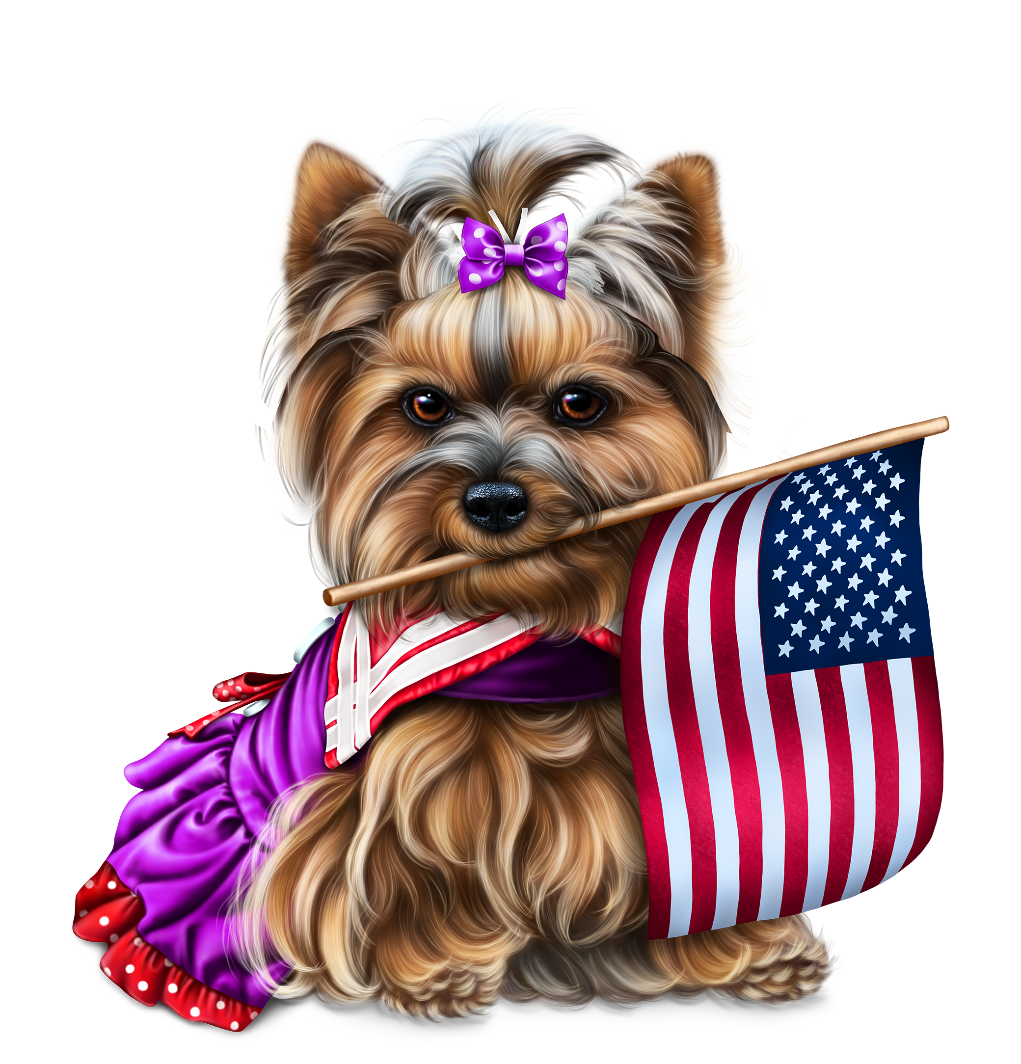 Description Cute Animals Images Yorkie Yorkie Lovers