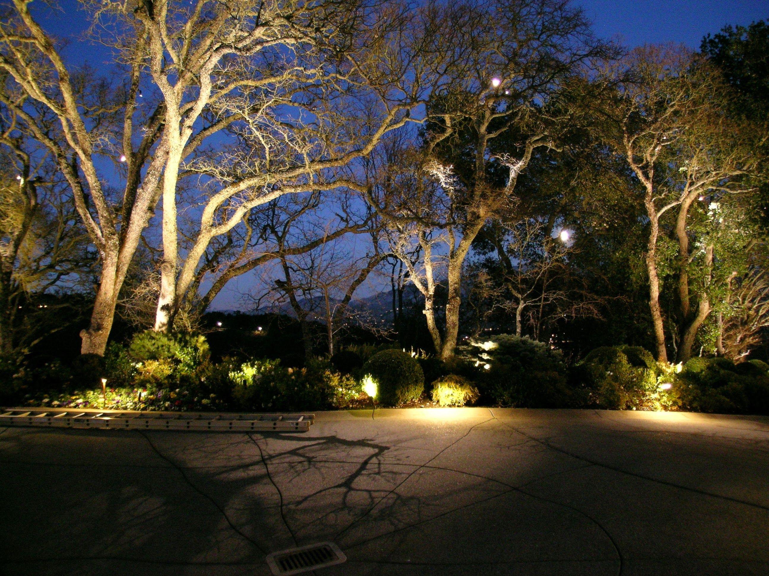 Pin On Lighting Trees