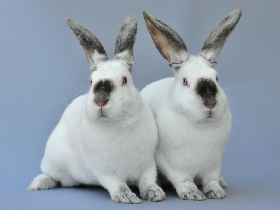 Ventura County Animal Shelter Camarillo Ca Some Of Our Adoptable Rabbits Will Be At Ventura Pet Barn This Sunday Oct 21s Animals Pets Bunny Care