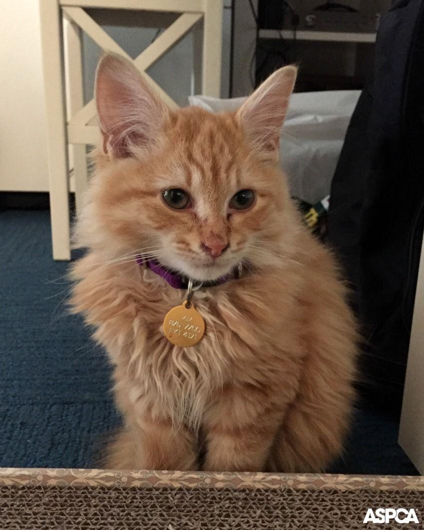 Happy Tails Mineola Meets Michele Tabby Kitten Orange Orange