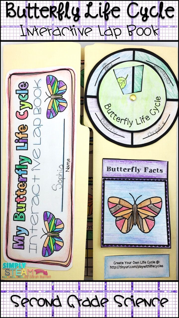 butterfly life cycle lapbook and journal elementary science life cycles butterfly life. Black Bedroom Furniture Sets. Home Design Ideas