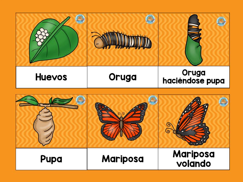 Tu Tarea Ciclo De La Mariposa Ciclo De La Mariposa Ciclo De Vida De La Mariposa Ciclo De Vida Animales