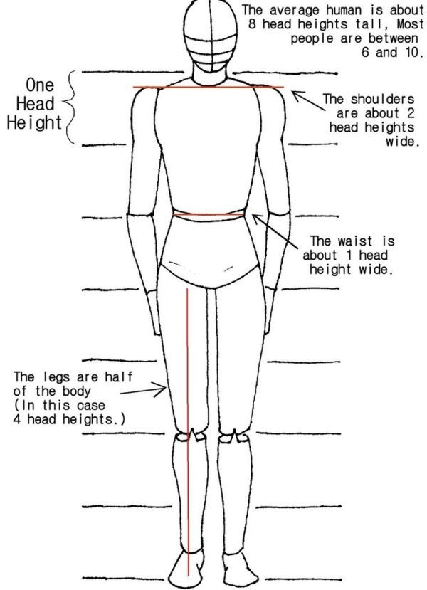 Drawing Human Proportion Proportions For Drawing Human Body By