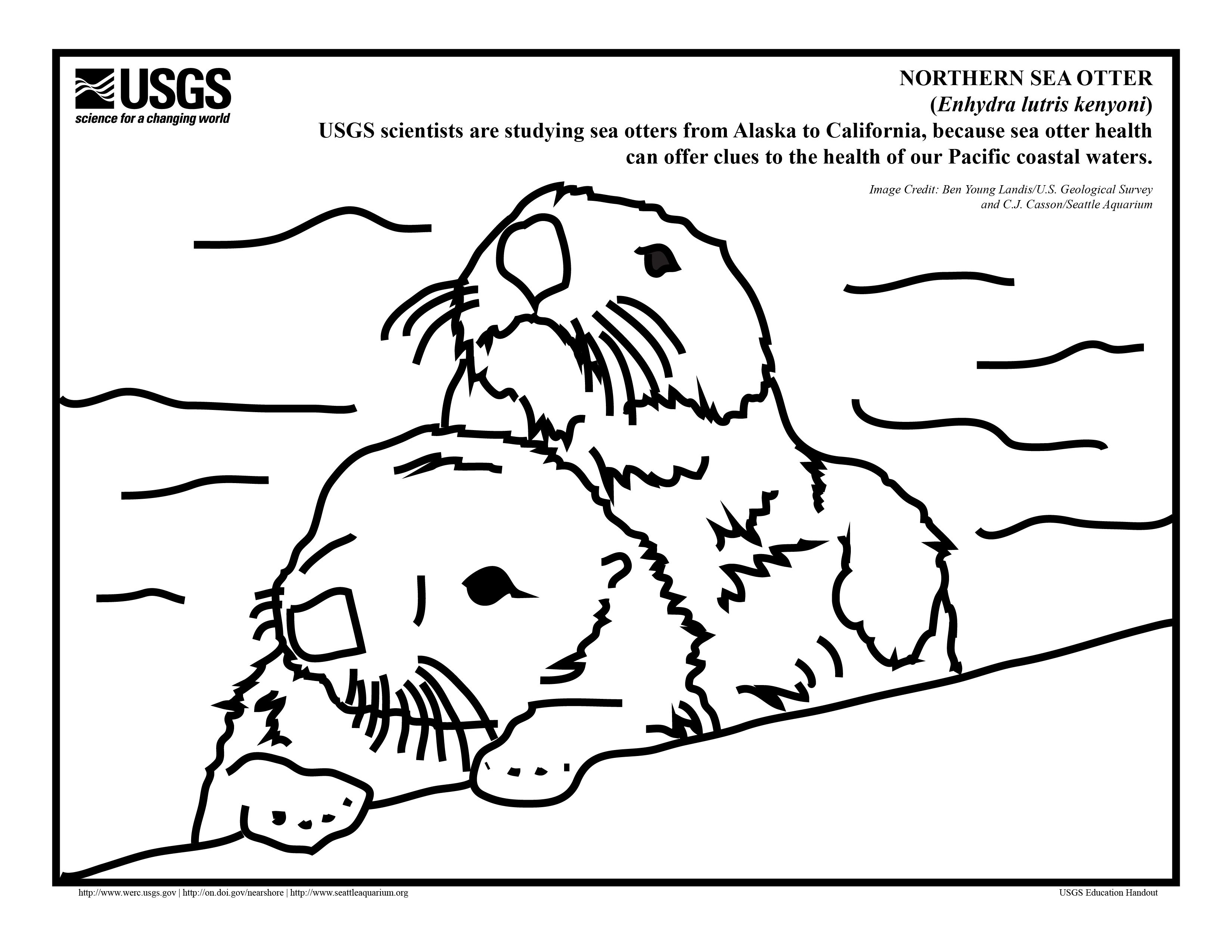 Sea Otters Coloring Sheets Yahoo Image Search Results It S Sea