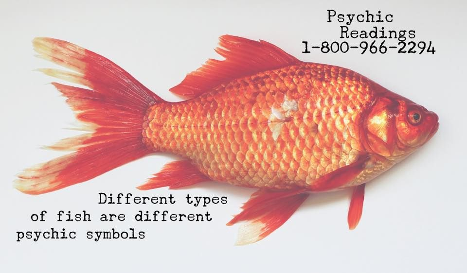 Goldfish can represent luck, fertility and prosperity. Sharks can represent survival, goals and fearlessness.  www.thepsychicline.com  1-800-966-2294  20+ years of booking and testing psychic readers. Accurate, caring and professional psychic readings by phone.   New client specials available.   Entertainment 18+