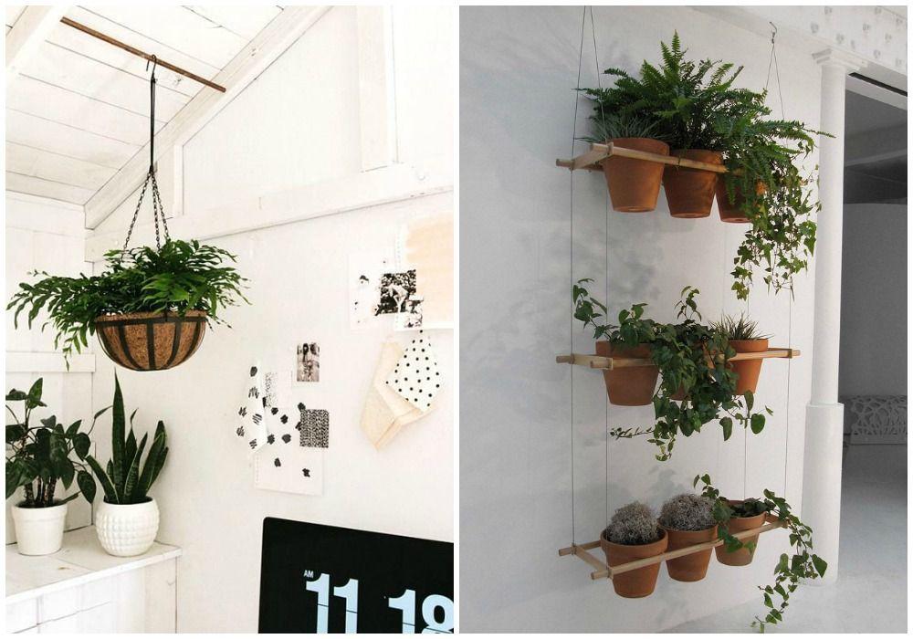Plantas colgantes de interior plantas de interior que for Plantas de interior que necesitan muy poca luz