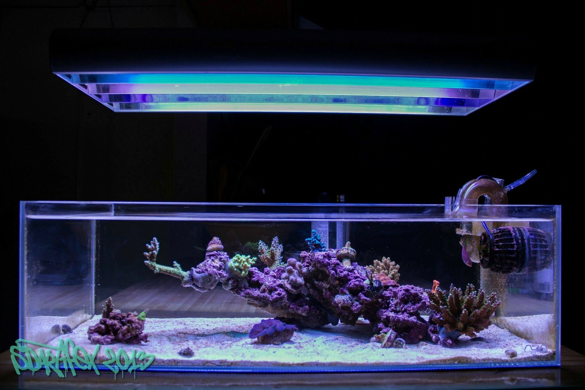 Aquarium Image By Chris Phillips Small Apartments Aquarium Countertops