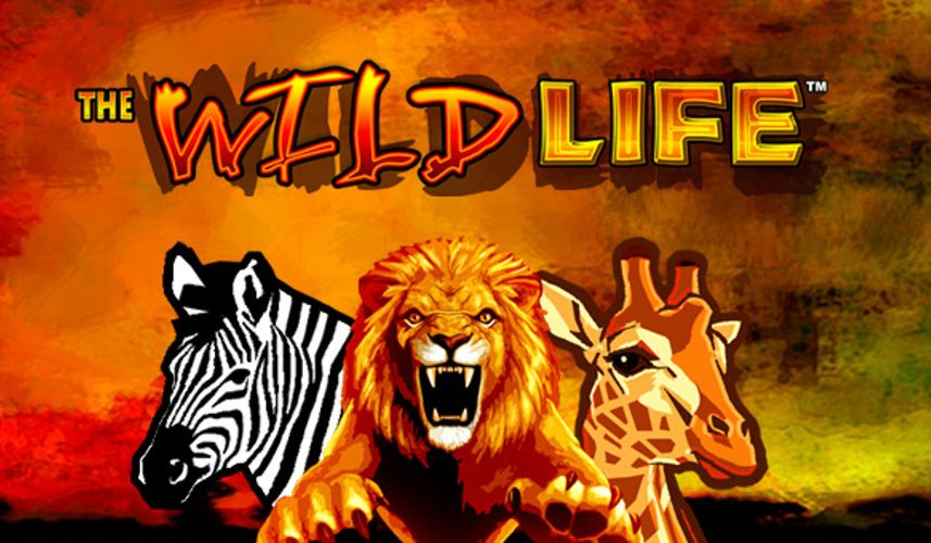 The Wild Life IGT Slot Review Igt slots, Wildlife, Slot