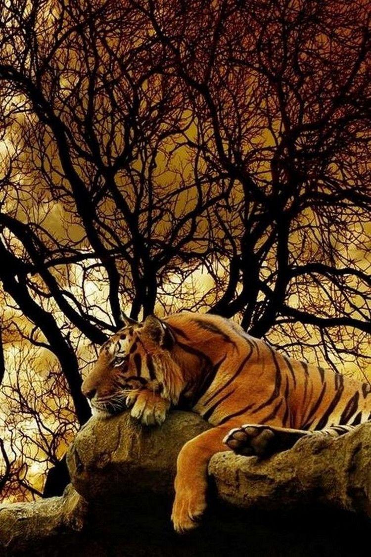 300+ Best Strong Animals images in 2020 | animals, animals beautiful,  animals wild