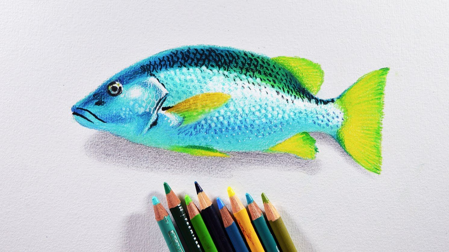 How To Draw A Fish Prismacolor Colored Pencils Tutorial Lost