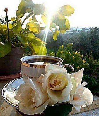 Pin by nopsis on Turkish Coffee Pinterest