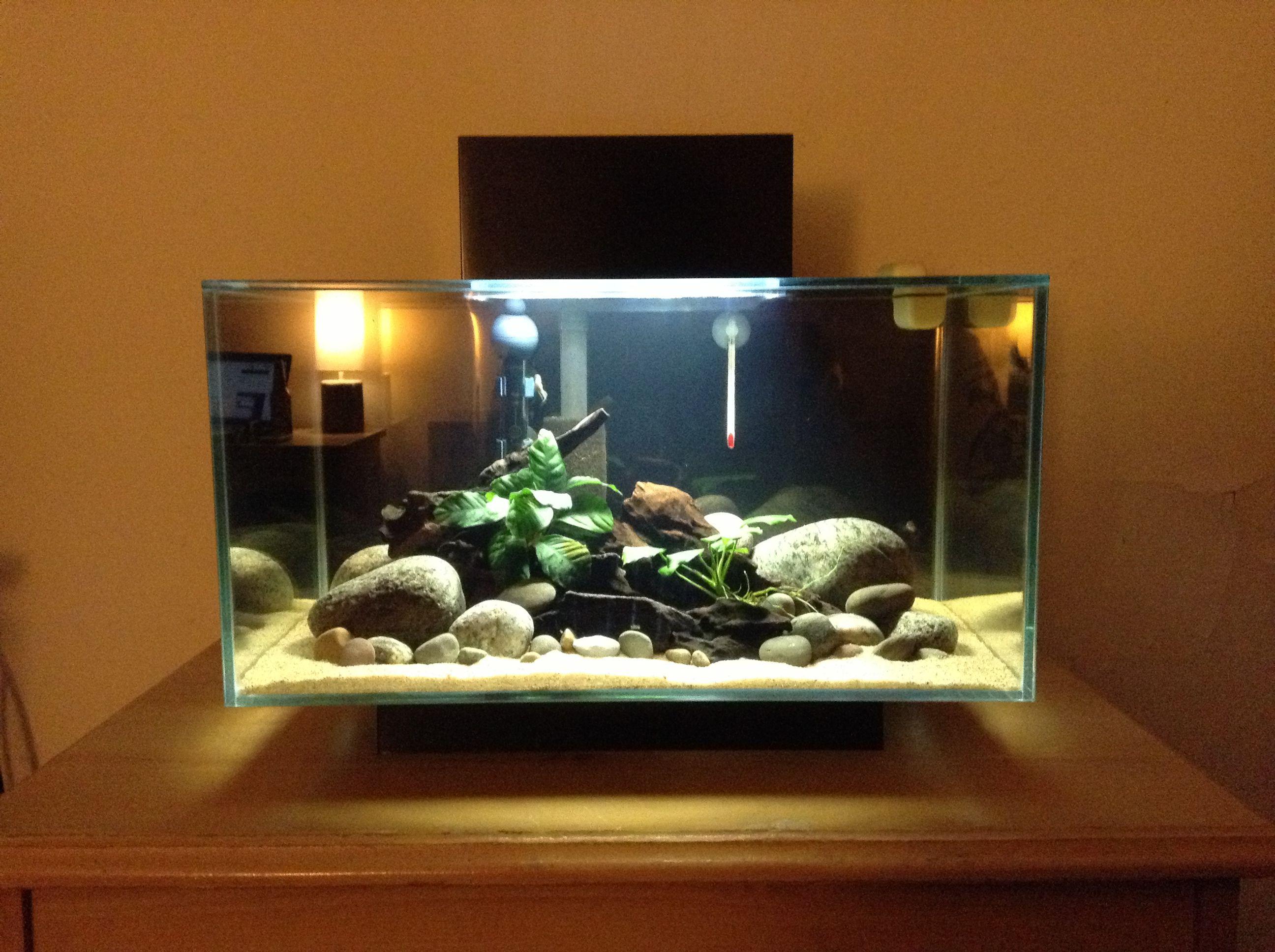 56f589e3ea729a0ec7854e3a33f6a6a6 Incroyable De Aquarium Deco Des Idées